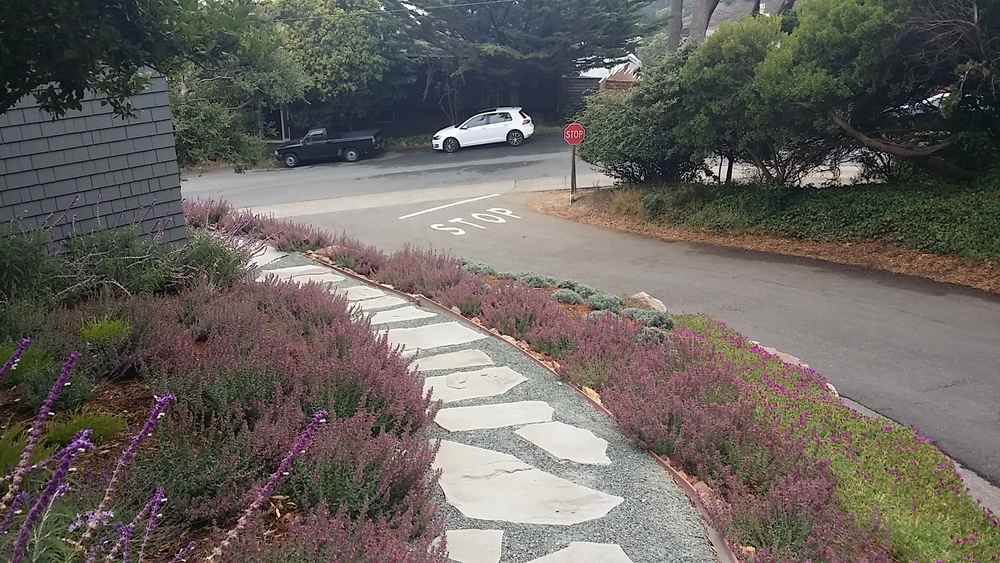 Mill Valley Landscape Architect 106