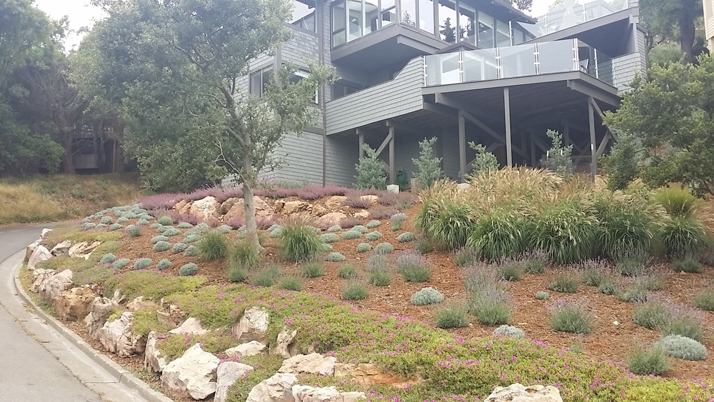 Mill Valley Landscape Architect 109