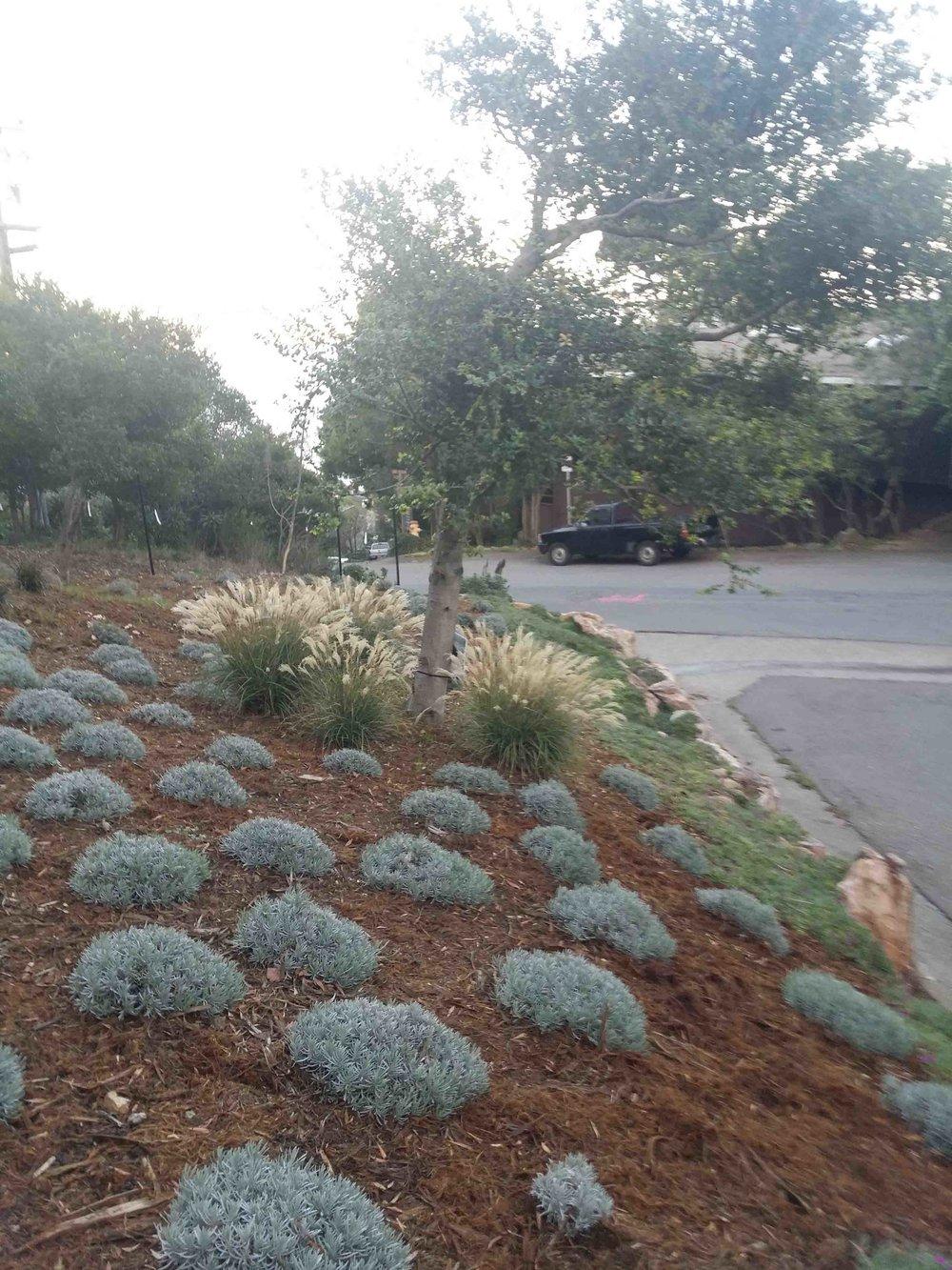 Marin Landscape Designer 11