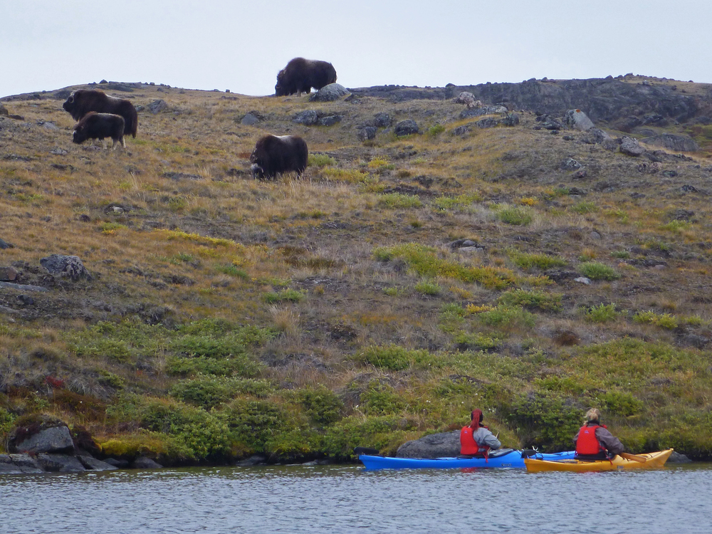 Carolina and Jessica by musk ox herd - Kopi.jpg