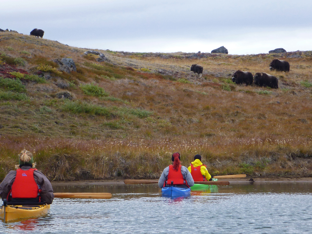 Three kayakers and musk ox herd - Kopi.jpg