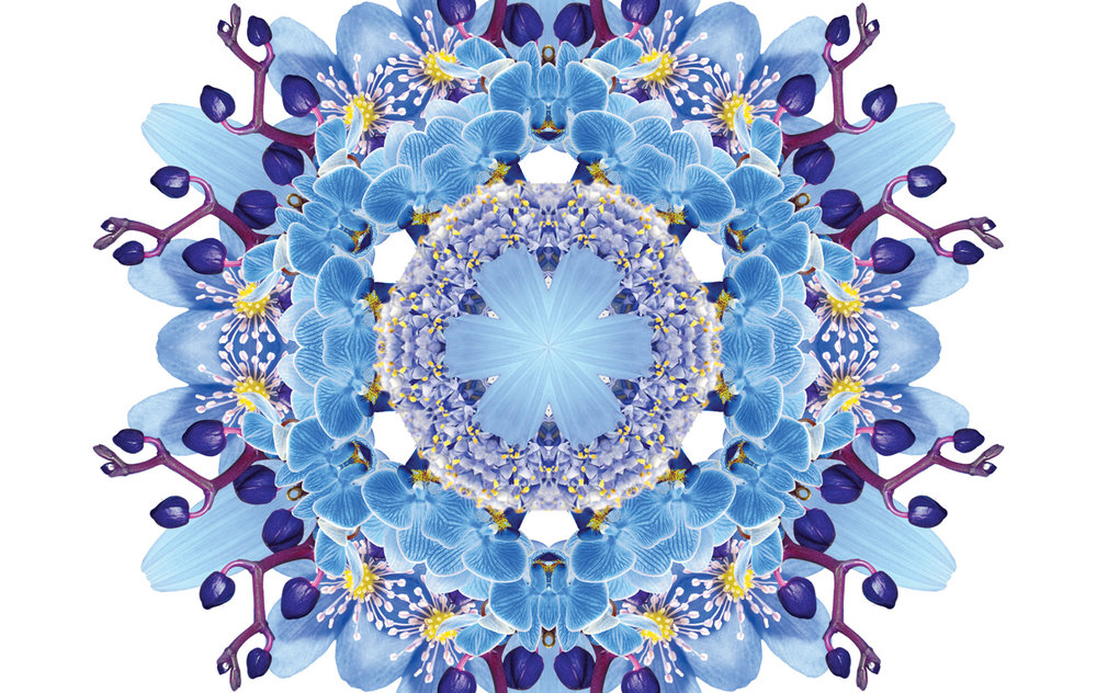 flora-web7.jpg