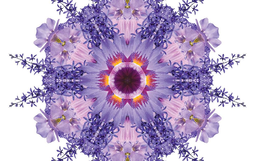 flora-web9.jpg