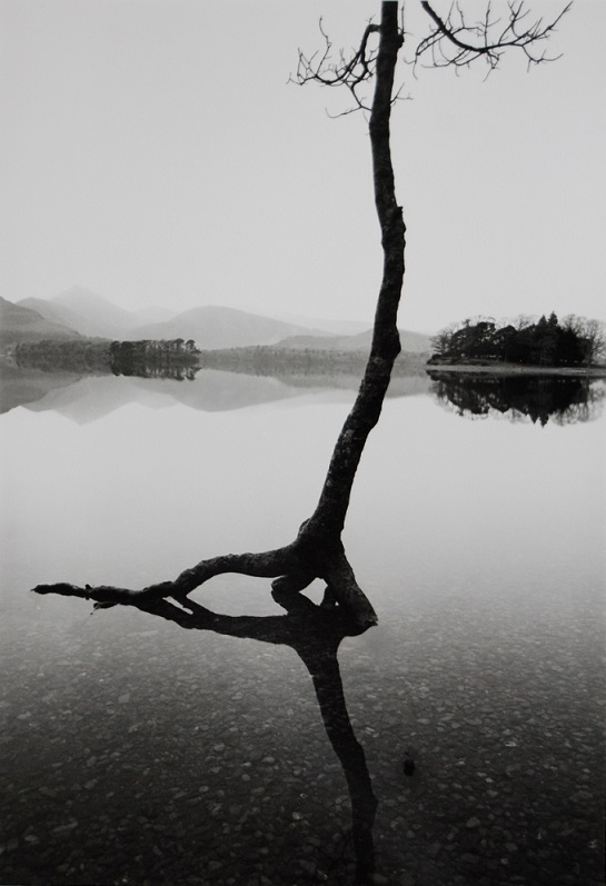 Flooded Tree © The British Library