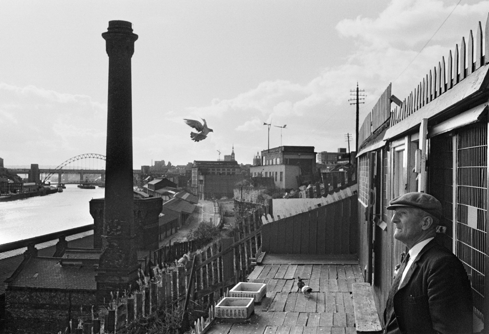 Newcastle upon Tyne. Pigeon cree. September 1974.