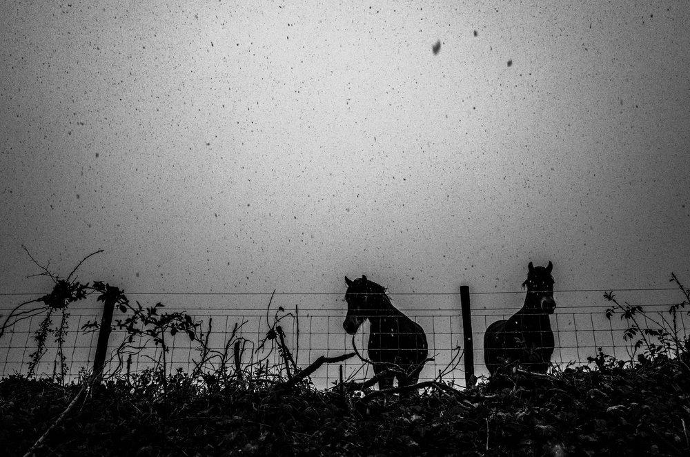 Image © Nicholas Bell