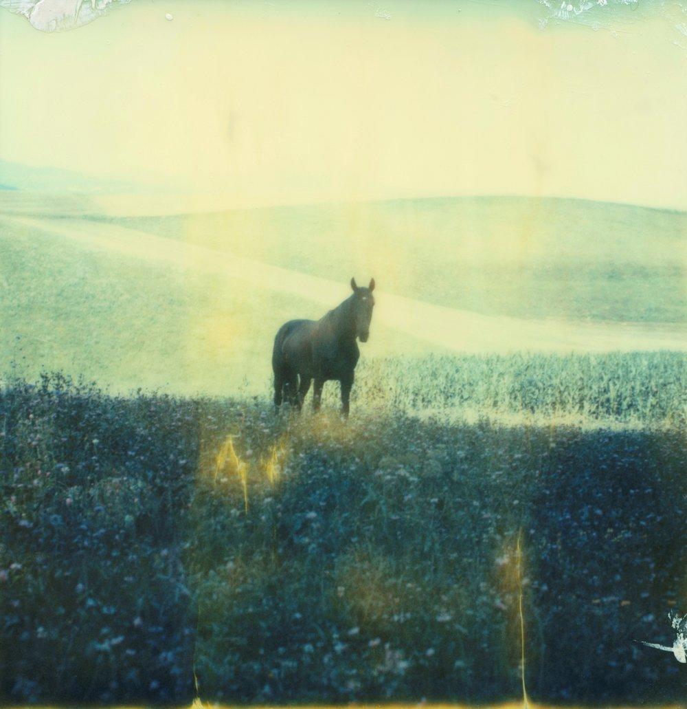 5-wild black horse.jpg