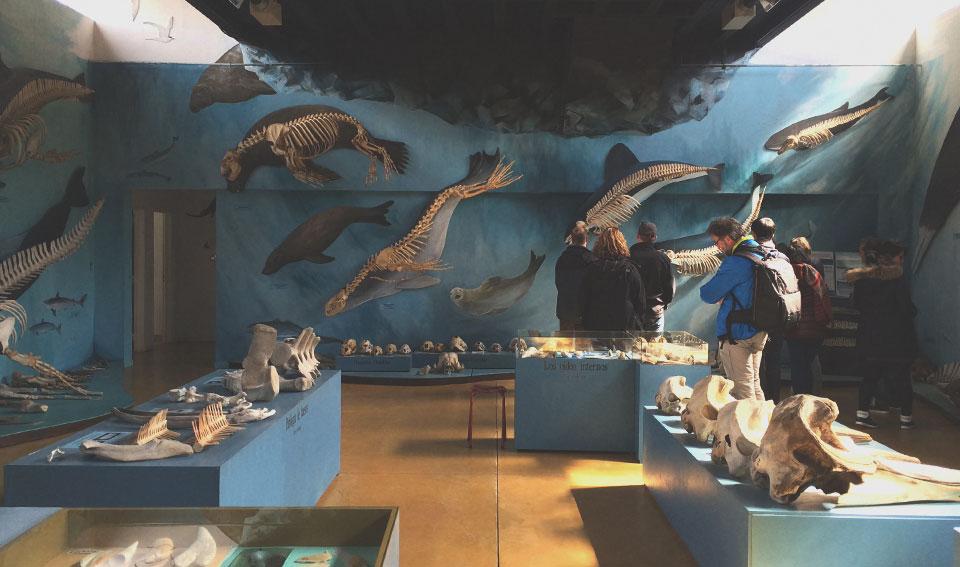 Interior do Museu Acatushún, com sua vasta coleção de esqueletos de mamíferos marinhos.