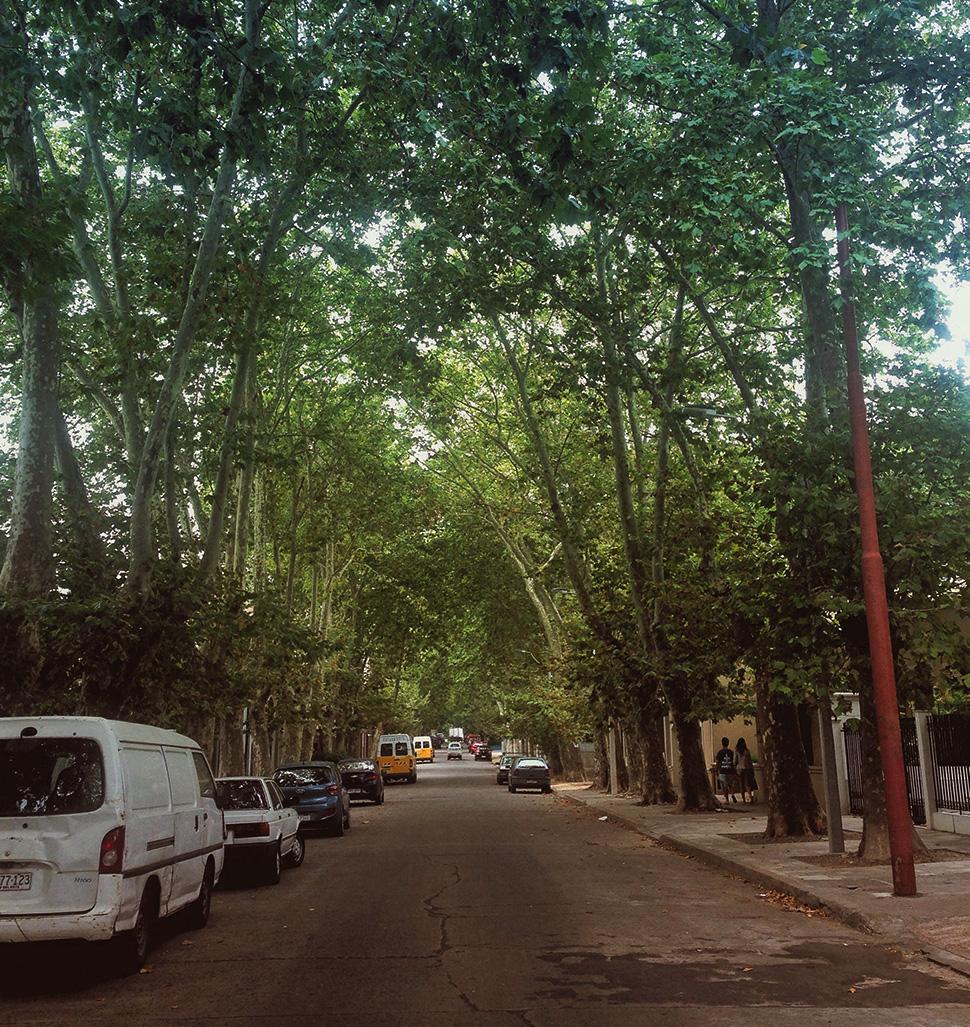Ruazinhas tranquilas e arborizadas de Puntacarretas