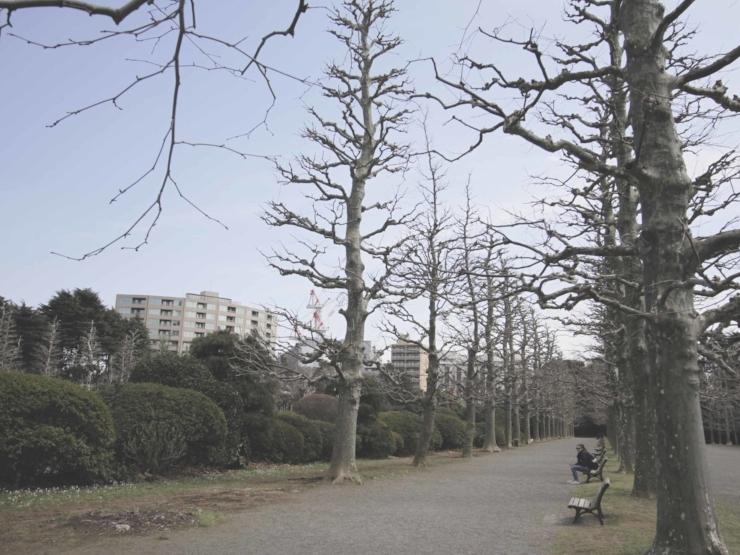 shinjuku gyoen park2 .jpg
