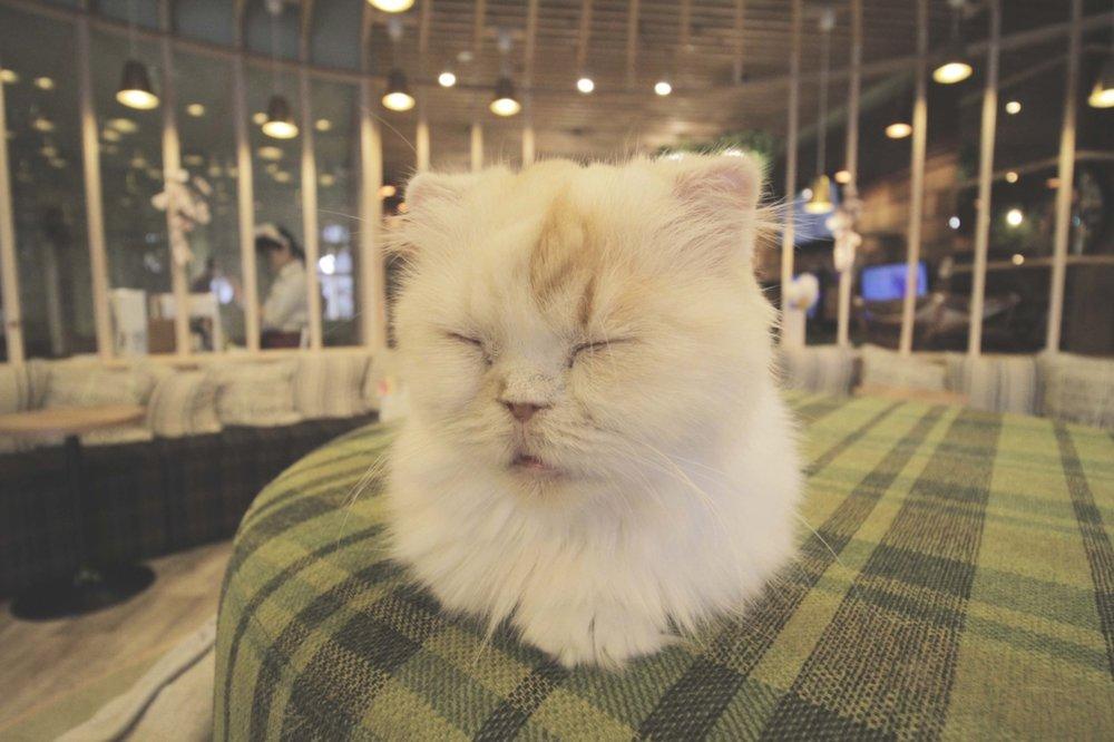 Um dos gatinhos fofos do Cat Café em Akihabara