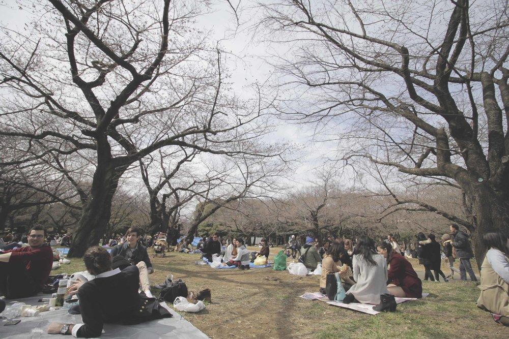 Piquenique no parque Yoyogi embaixo das cerejeiras ainda sem flores :(