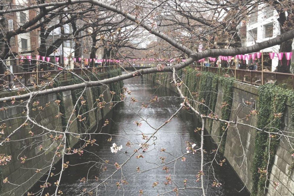 Rio de Naka Meguro