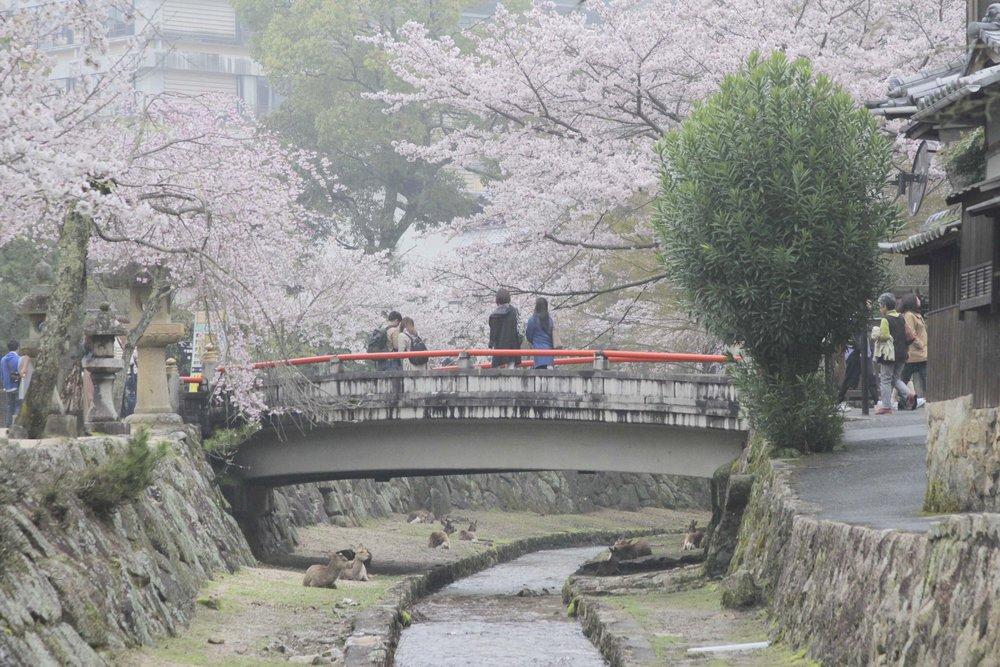Miyajima_parque.jpg