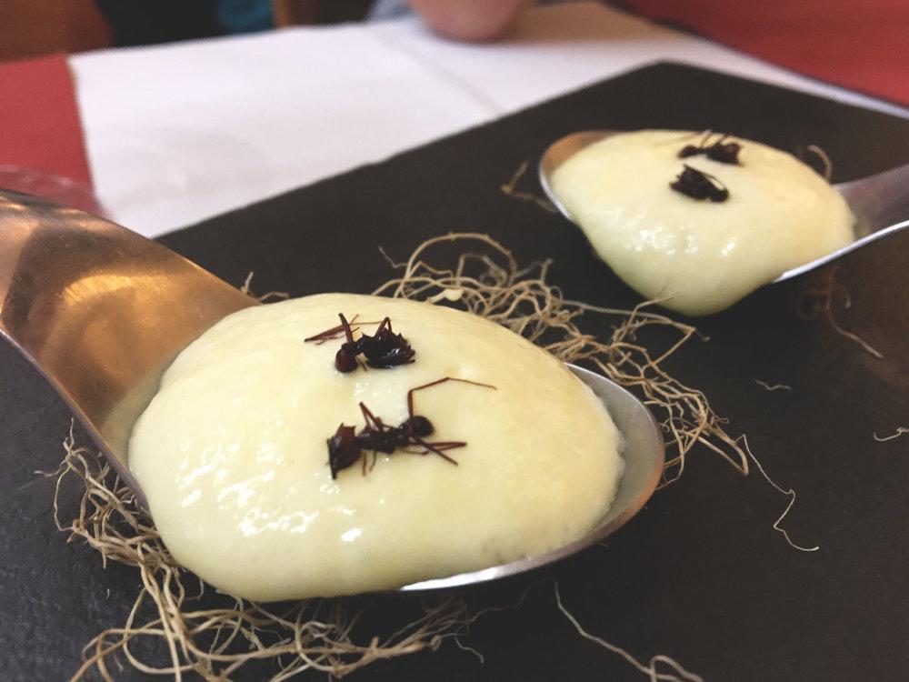 Sim, comemos formigas Saúva e tinha sabor de capim santo.