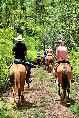 Horseback Riding - Ideal for both experienced and non-experienced riders. Leaving from Outback Stables, guests will pass through a citrus grove before entering into the hills that surrounded the Maya Mountains. The trail winds over Pine Forest Hills with beautiful views until you reach the bank of the Sittee River.