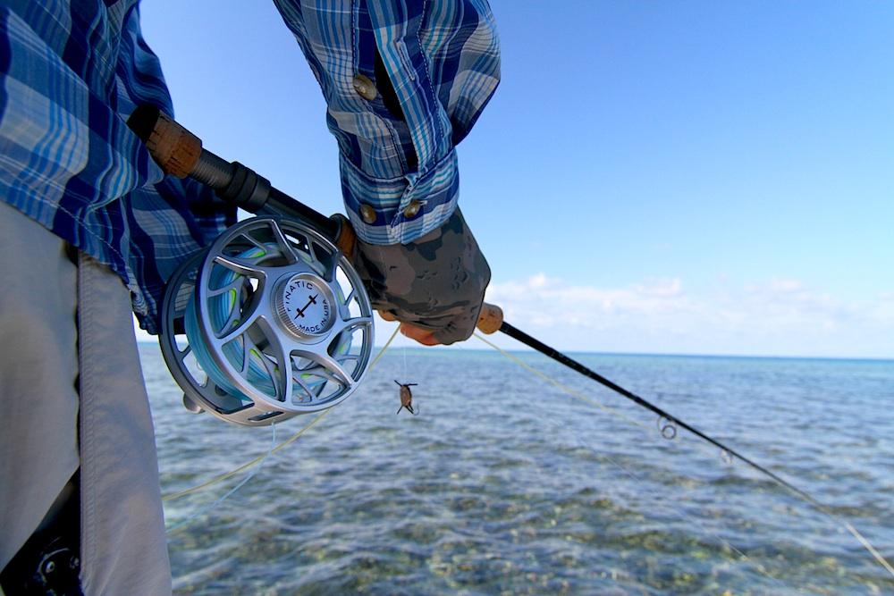 Baure Crab Blue Horizon Belize.jpeg