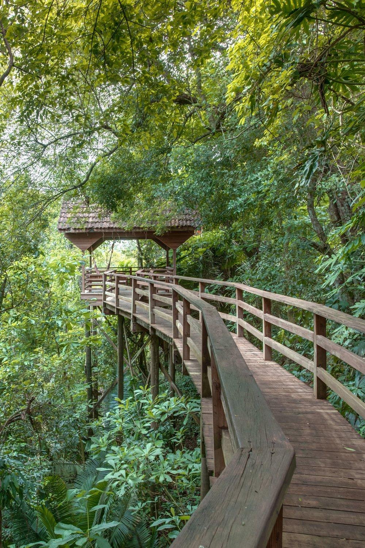 Sweet Songs Jungle Lodge -