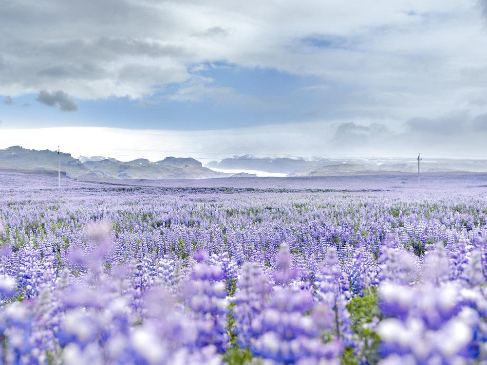 Iceland_2015_0469_usm.jpg