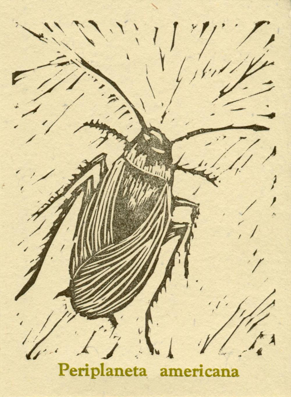 Palmettobug.jpg