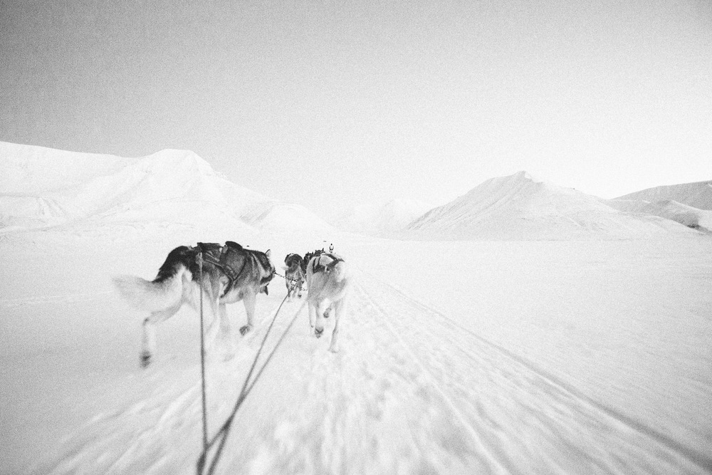 Dog Sledding outside Svalbard, Longyearbyen, Norway. Minimalistic arctic nature.