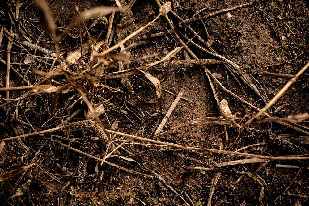 04_Malawi-drought-Kasper-Nybo.jpg