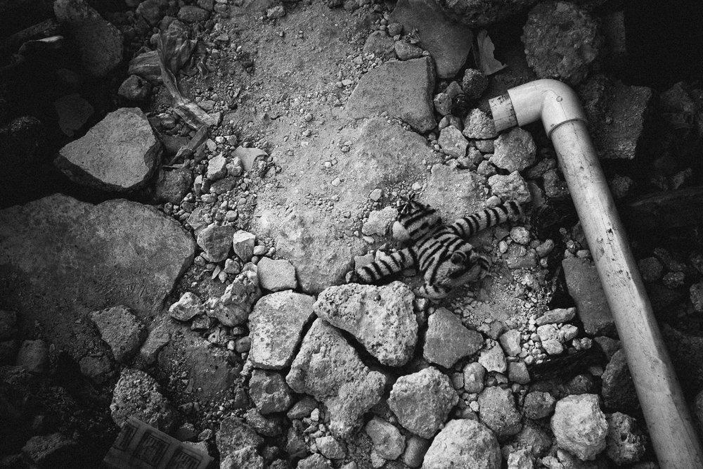 Haiti-Port-au-Prince-earthquake-Kasper-Nybo-2-14.jpg