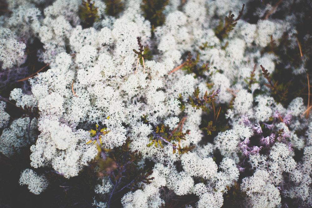 Kasper Nybo Photography front-09.jpg