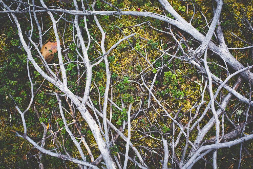 Portfolio - Kasper Nybo Photography-11.jpg