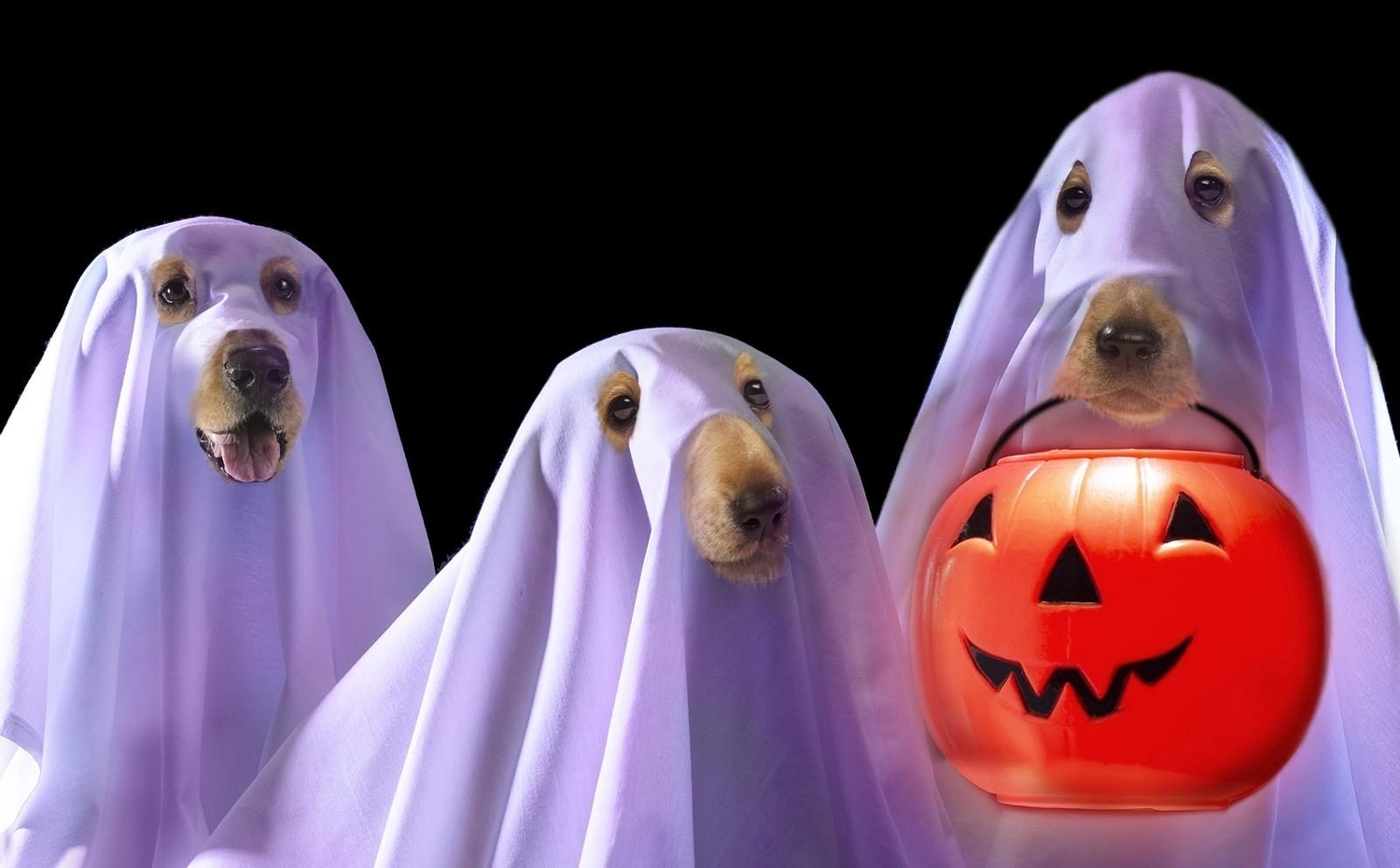 Halloween Pet Safety Tips — Dan's Dog Walking and Pet Sitting
