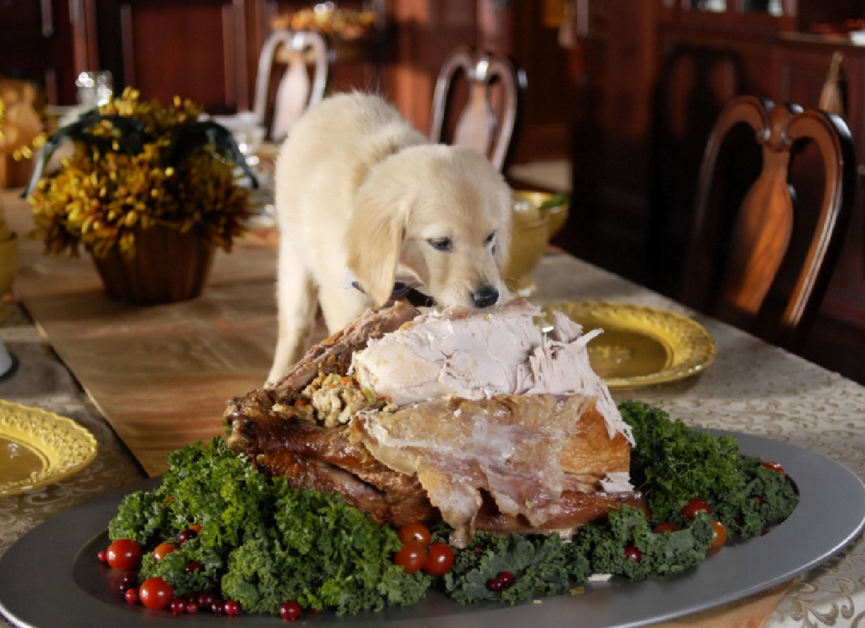 Image result for lots of thanksgiving food
