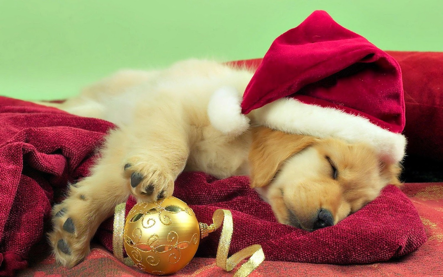 Holiday Gifts That Your Dog Will Love — Dan\'s Dog Walking and Pet ...