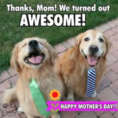 Image result for mothers day for a dog mom