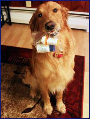 Psychiatric service dog, Bradley, reminds his owner to take their medication!