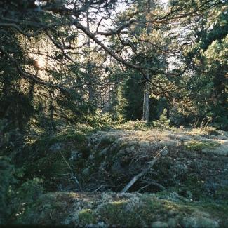 Anchorage 1x1.jpg