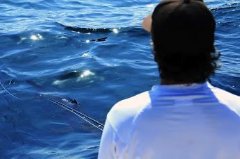 OS MArk shark.jpg
