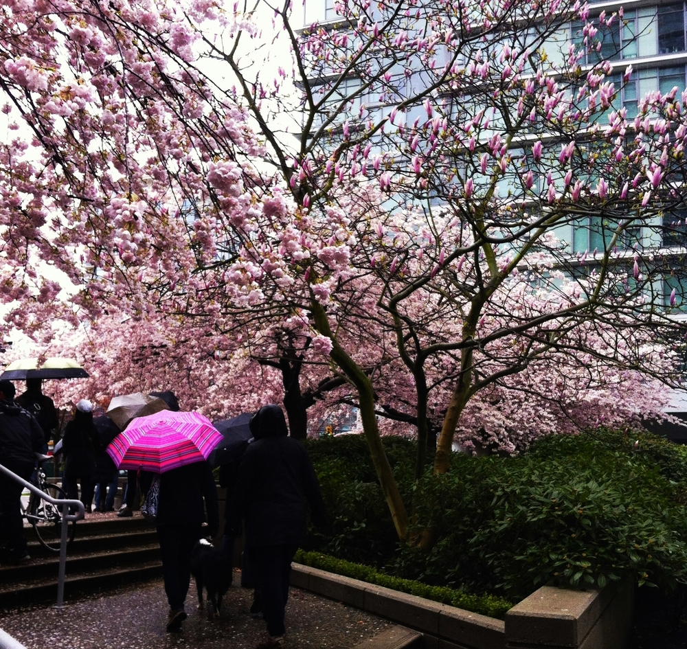 WHERE THERE IS RAIN, THERE ARE BLOSSOMS!