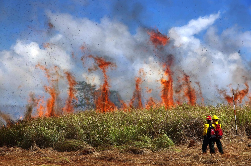 This photo of a head fire in nonnative guinea grass in a fallow ag lot was featured in each of the 4 presentations I gave over the past month. 24% of Hawaii's land area (almost 1 million acres) is covered in fire-prone, nonnative grasslands and shrublands (photo by C. Trauernicht).