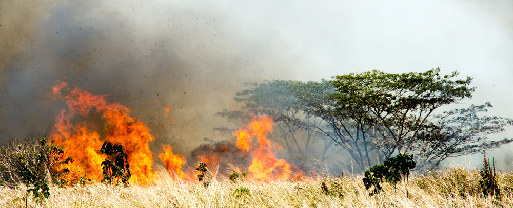 Wildfire in a nonnative grassland on central oahu