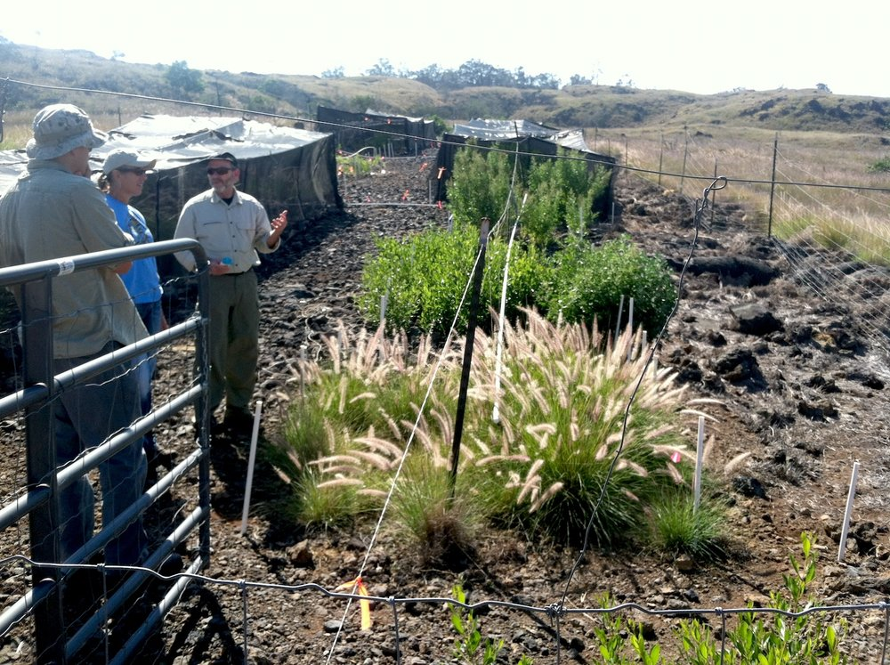 Susan and John Hall, Director for the Joint Fire Science Program, discuss the experimental fuel break plots. Fountain grass is visible in the foreground, native plantings in the background. Photo: Susan Cordell