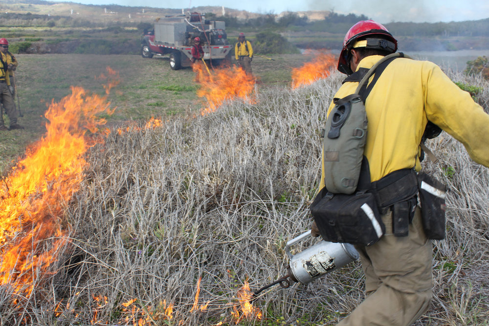 A 2010 controlled burn underway at James Campbell National Wildlife REfuge. Prescribed burns are used to improve water bird habitat there. Photo: US Army Garrison - Hawaii.
