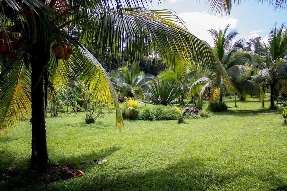 costarica2015-9341.jpg