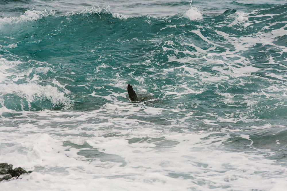Hawaii-7757.jpg
