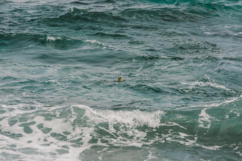 Hawaii-7769.jpg