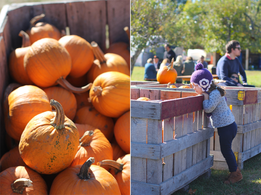 A beautiful, sunny, autumn afternoon is perfect for picking pumpkins.So we drove north until the colors of the leaves started to turn amber and auburn,and went to find some gourds.