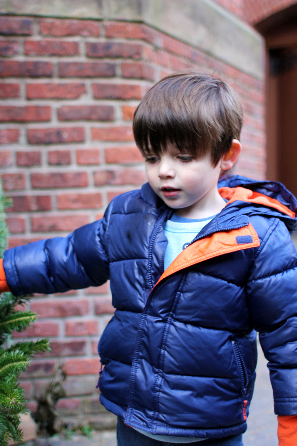 Picking out a tree isn't easy, but Everett found the best one. And it just so happened to also be the biggest.