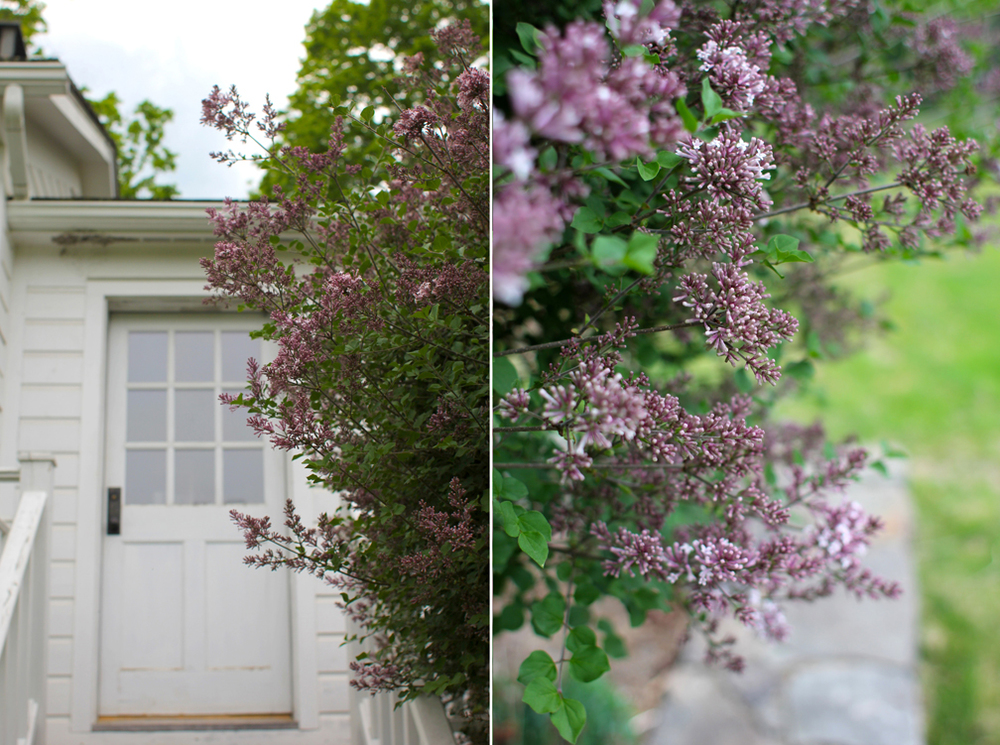 Waking up to the fragrant smell of lilac in the air was something I could really get used to.