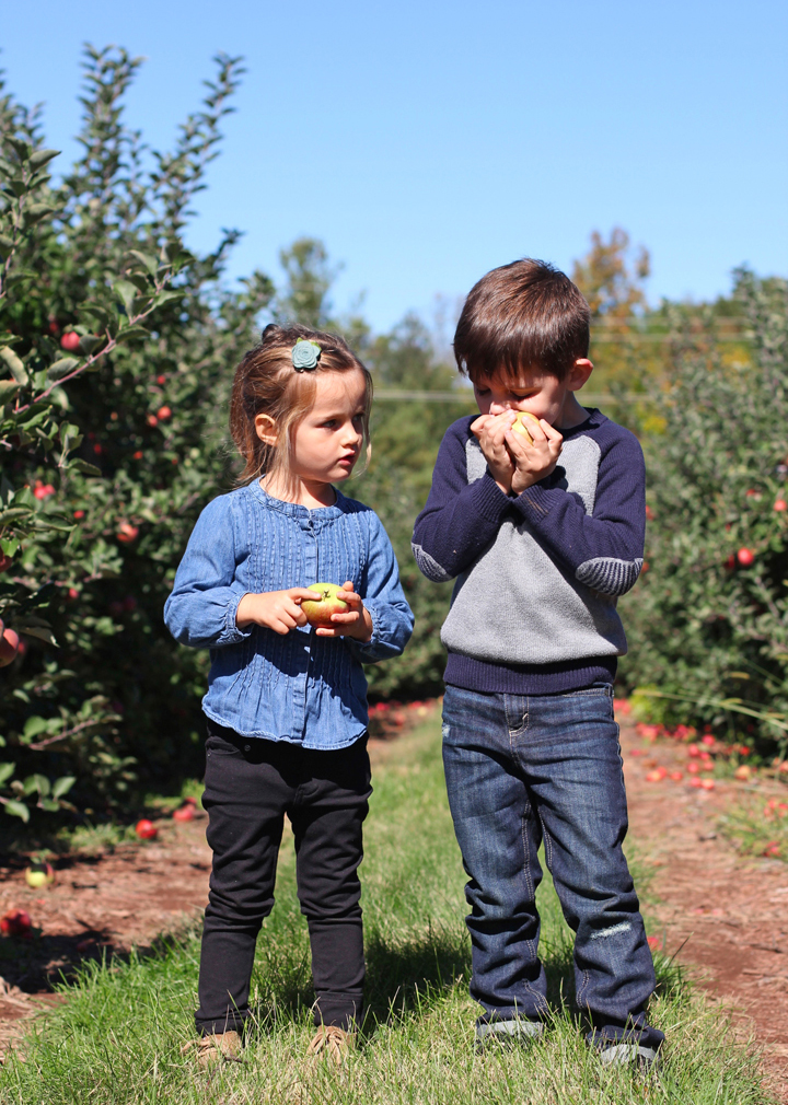 Thankfully the orchard had an all-you-can-eat-while-you-pick policy, because you couldn't stop these two from sampling the merchandise and I don't think we've ever eaten so many apples at one time!
