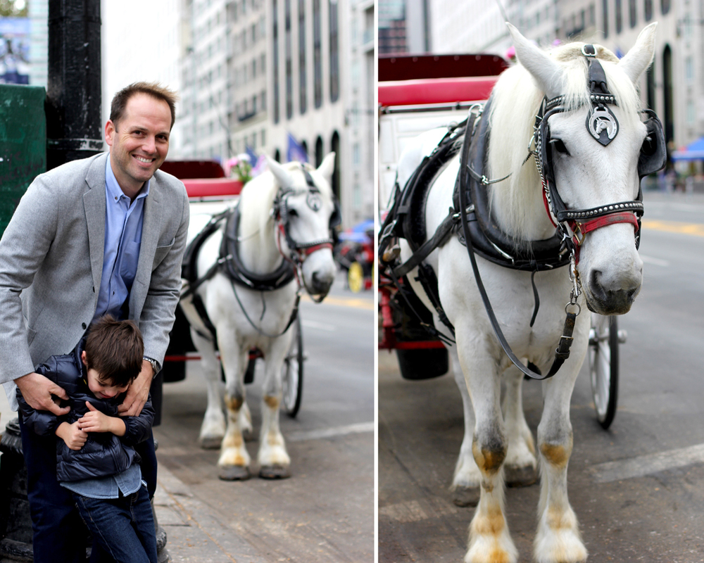 We'll never be able to cross West 59th Street south of Central Park without looking for Chestnut. We didn't see him this time, but we did see this handsome steed.