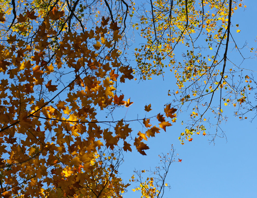 First rule of fall: don't forget to look up!